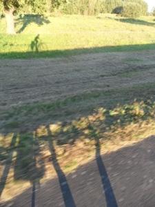 Schatten eines Radfahrenden im Grünen.